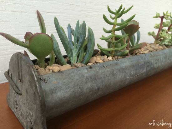 antique repurposed succulent garden