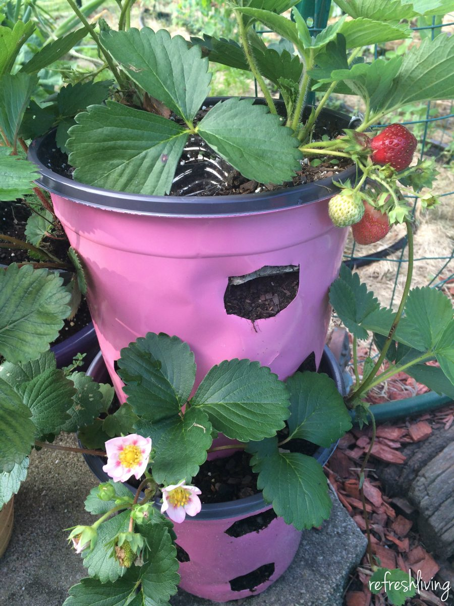 Diy Strawberry Planter From Recycled Materials Pinterest