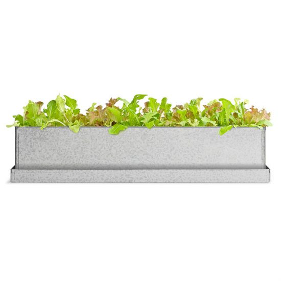great-gifts-for-homeowners-lettuce-windowsill-garden